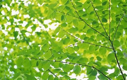 Nature Leaves Allwallpaper