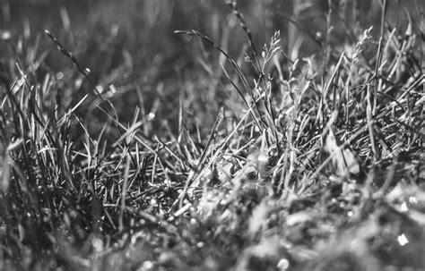 Black, And, White, Nature, Dark, Grass, Monochrome