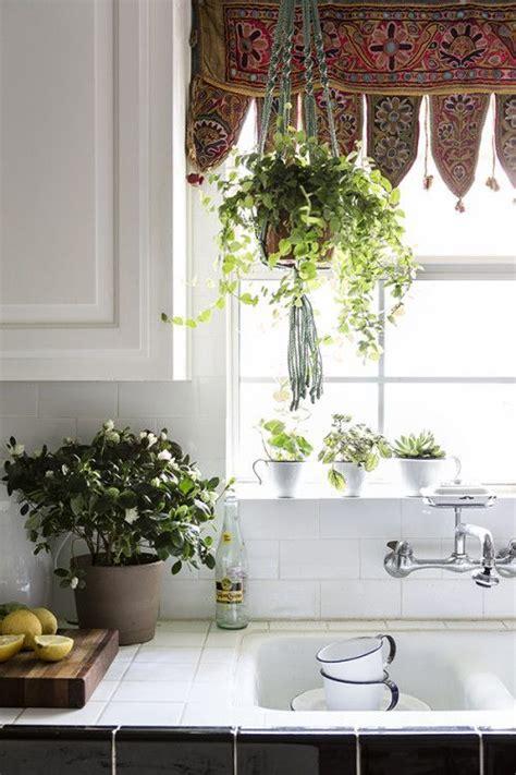 Best Plants For Bathroom Window by 25 Best Ideas About Kitchen Plants On Green