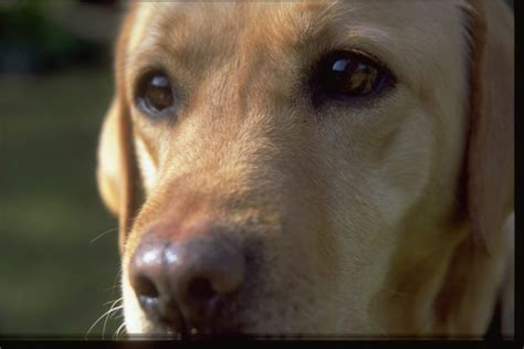 hypothyroidism  dogs  owners    shooting uk