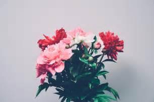 peony bouquet 무료 사진 꽃다발 꽃 레드 핑크 자연 pixabay의 무료 이미지 925225