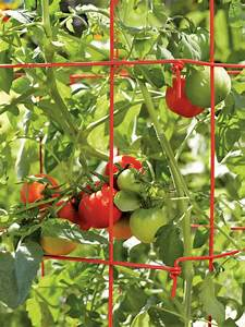 Veseys Seeds Blog  Grow Perfect Tomatoes
