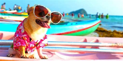 Perfect Pet Photo Competition | AllClear Travel Blog