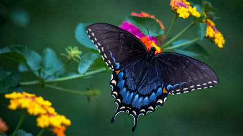 wonderful butterfly macro photo hd wallpaper wallpaper