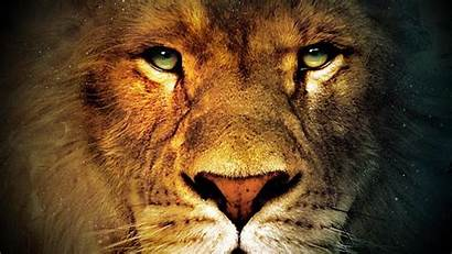 Lion Eyes Angry Face Wallpapers Male Faces