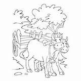 Coloring Bullock Cart Bull Matador Printable Getcolorings Designlooter Benny sketch template