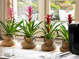 Blumen Für Fensterbank : blumen f r fensterbank innen wohn design ~ Markanthonyermac.com Haus und Dekorationen