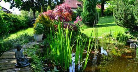 cuisine pour les petits les plantes aquatiques pour bassin de jardin
