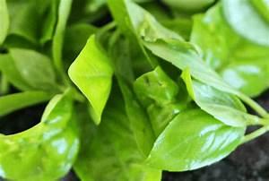 Smartpoints Berechnen : salat mit wassermelone und feigenessig weight watchers rezept wie abnehmen so abnehmen ~ Themetempest.com Abrechnung