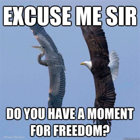 Freedom Eagle Meme - murica freedom meme www pixshark com images galleries with a bite