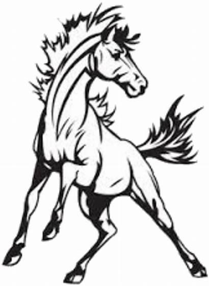Mustang Clipart Mascot Drawing Drawings Bronco Buffalo