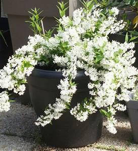 Plantes D Ombre Extérieur : balcons terrasses quelles plantes pour quelle ~ Melissatoandfro.com Idées de Décoration