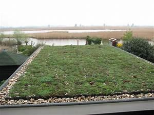 Extensive Dachbegrünung Pflanzen : extensive dachbegr nung geringer aufwand gro e wirkung ~ Frokenaadalensverden.com Haus und Dekorationen