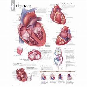 Pig Heart Drawing At Paintingvalley Com