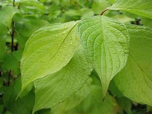 Leaves Green | Free Stock Photo | Close-up of green leaves ...