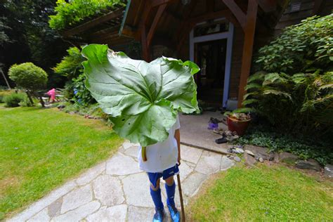 kitchen trash can 5 uses for rhubarb trash backwards