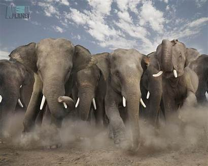 Wild Animals Animal Elephant Stampede Wildlife Wallpapers
