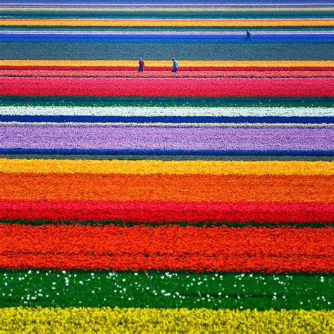 chambre de commerce pays bas chs de fleurs aux pays bas chambre237