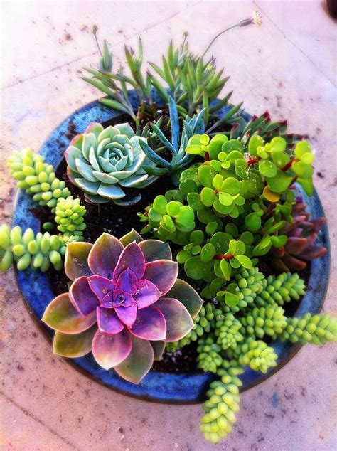 succulent gardens in pots succulent pot ideas shares a mixed succulent garden diy with us the results are gorgeous