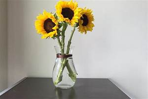 How To Care For Cut Sunflowers