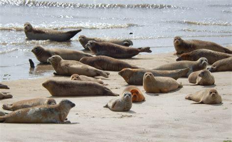 onafhankelijk intelligent gebruikt instinct en aanpassingsvermogen dat  de zeehond
