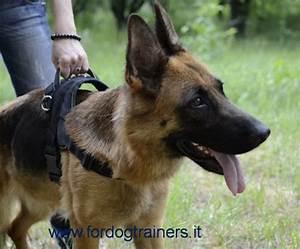 Passeggiate con il cane senza guinzaglio : Fordogtrainers, Negozio cani: accessori per cani