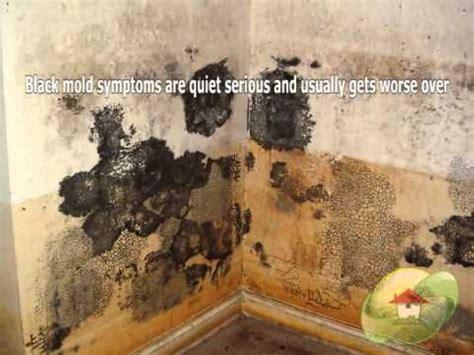 black mold dangerous youtube