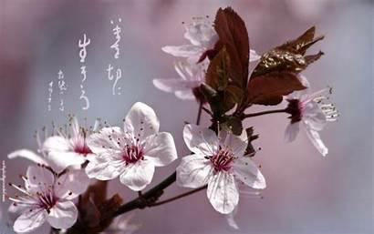 Calligraphy Japanese Desktop Wallpapers Seasons Backgrounds 1050