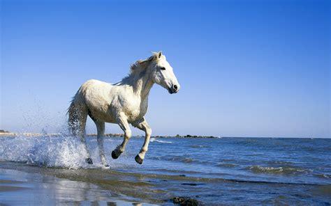 horse wallpapers widescreen horses hd desktop hourse 3d running windows camargue cool sea water 1920 1200 beach take