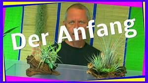 Pflanzen Terrarium Einrichten : ein ewiges oder zeitweise terrarium f r pflanzen youtube ~ Watch28wear.com Haus und Dekorationen