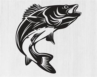 Walleye Svg Fishing Clip Fish Cricut Silhouette