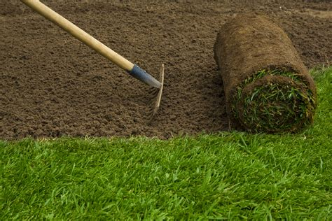 grass installation sod ottawa ottawa sod installation experts