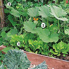 que planter dans potager comment cr 233 er des bordures jardins tuiles et tuile