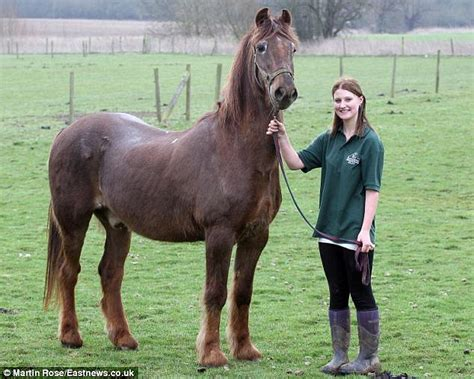 oldest horse irish shayne horses human draught years essex stable hand living worlds sanctuary previous cross arthritis thoroughbred lived sleep