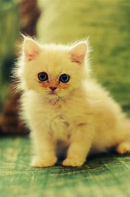 Super Cute Cat