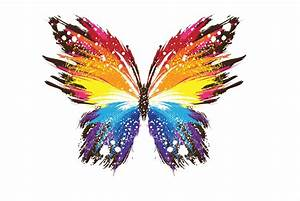 Colorful Butterfly Hd 35 Background - Hivewallpaper.com
