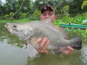 Nile Perch | Gillhams Fishing Resorts