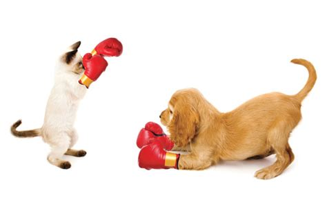 cats  dogs    prefer