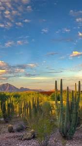 landscape, , nature, , desert, , cactus, , mountain, , arizona