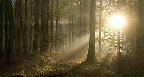 chambres d hotes montpellier forêts remarquables de guide et photos