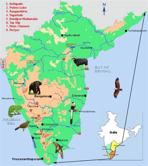 bird spots in southern india birds of southern india