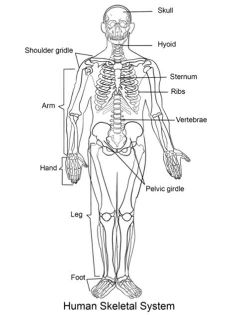 dibujo de esqueleto humano  colorear dibujos  colorear imprimir gratis