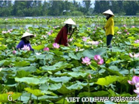 chambre hote ardeche photo lotus la fleur nationale du photos eté