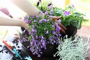 Balkonblumen Richtig Pflanzen : balkonblumen pflanzen trends sorten tipps zur pflege ~ Frokenaadalensverden.com Haus und Dekorationen