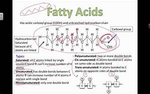Types Of Fatty Acids  2016  Ib Biology