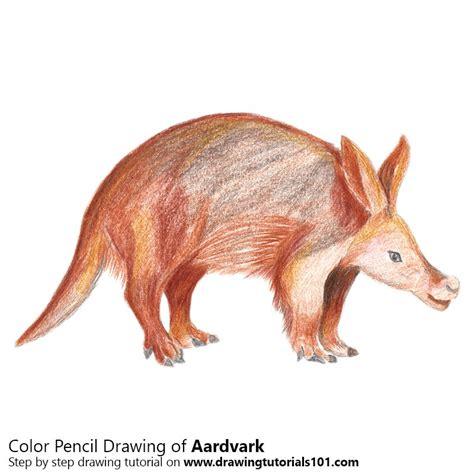 aardvark colored pencils drawing aardvark  color