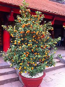 Arbre En Pot : 79 best images about fruit trees grown in pots on ~ Premium-room.com Idées de Décoration