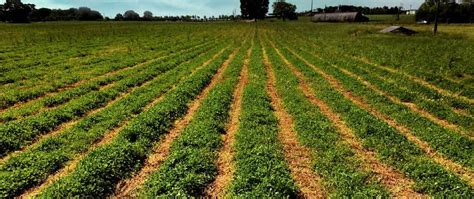 grass seed lawn repair cover crop seed mixes to improve farming pennington