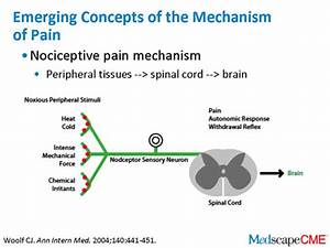 Emerging Concepts Of The Pathophysiology Of Chronic Pain