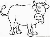 Cow Coloring Confused Pages Coloringpages101 sketch template